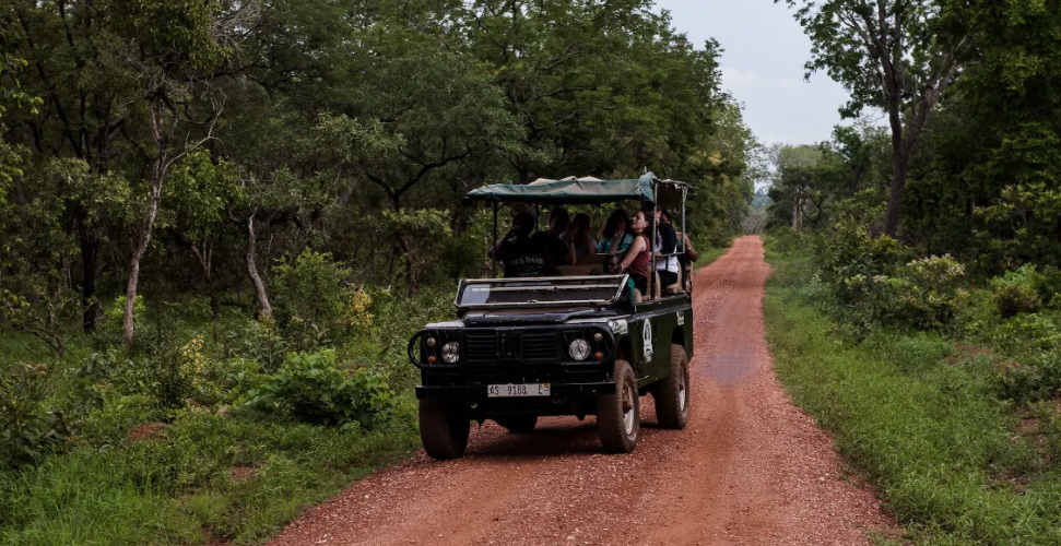 tamale transport