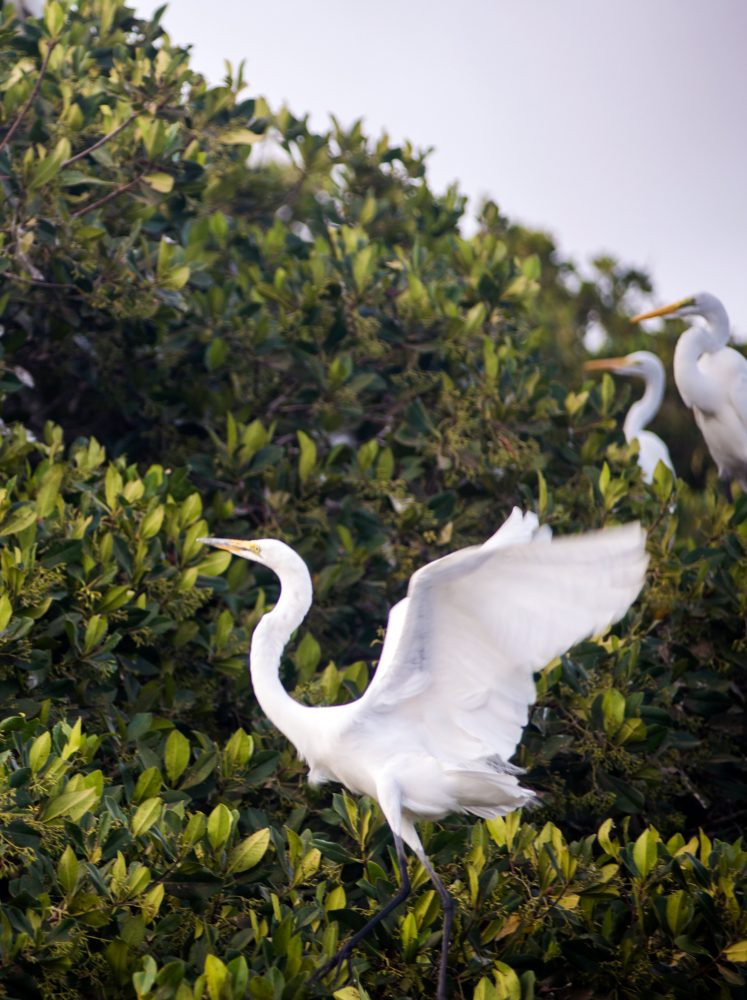 Birds and Wildlife of Senegal and Gambia